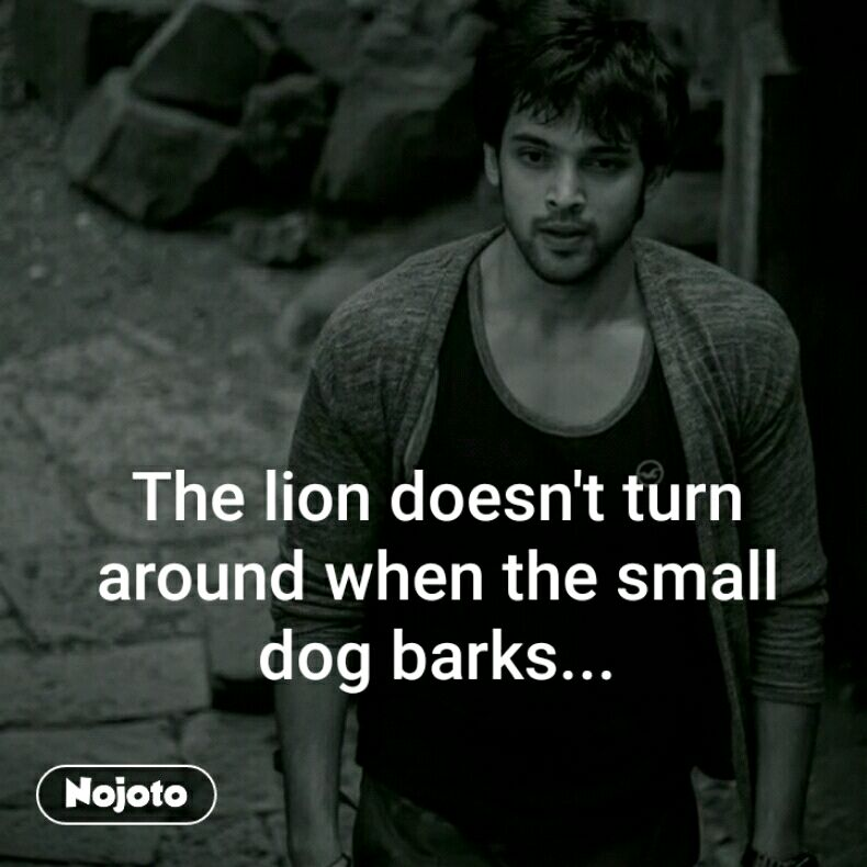 The lion doesn't turn around when the small dog ba | Nojoto