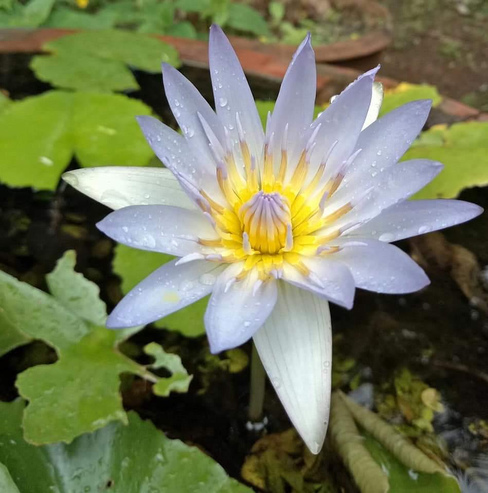 Nojotofresh Flowerphotograp Quotes Shayari Story Poem Jokes