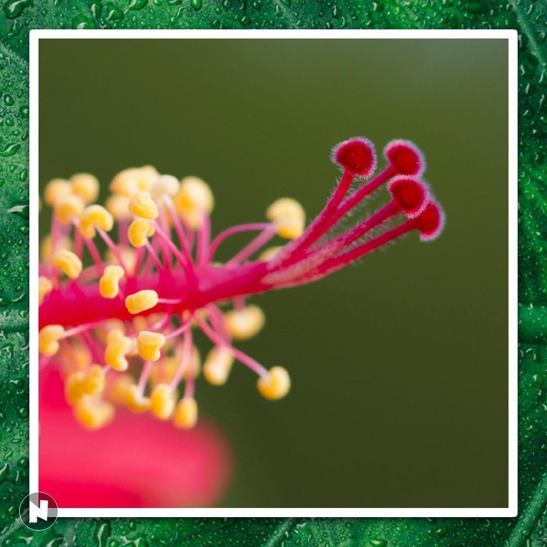 Beauty Of A Flower Quotes Shayari Story Poem Jokes Memes On Nojoto