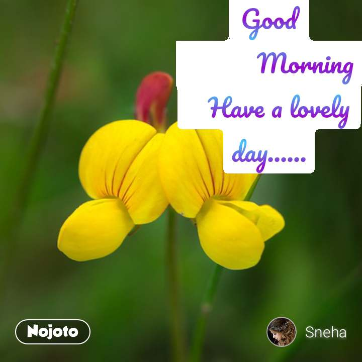 Good            Morning    Have a lovely day......