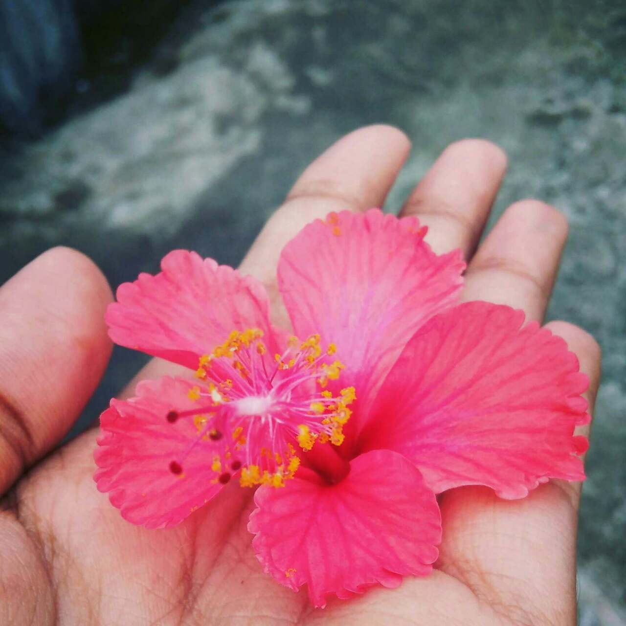 Nojoto Nojotophotography Hibiscus Flower Love Tst Infinite