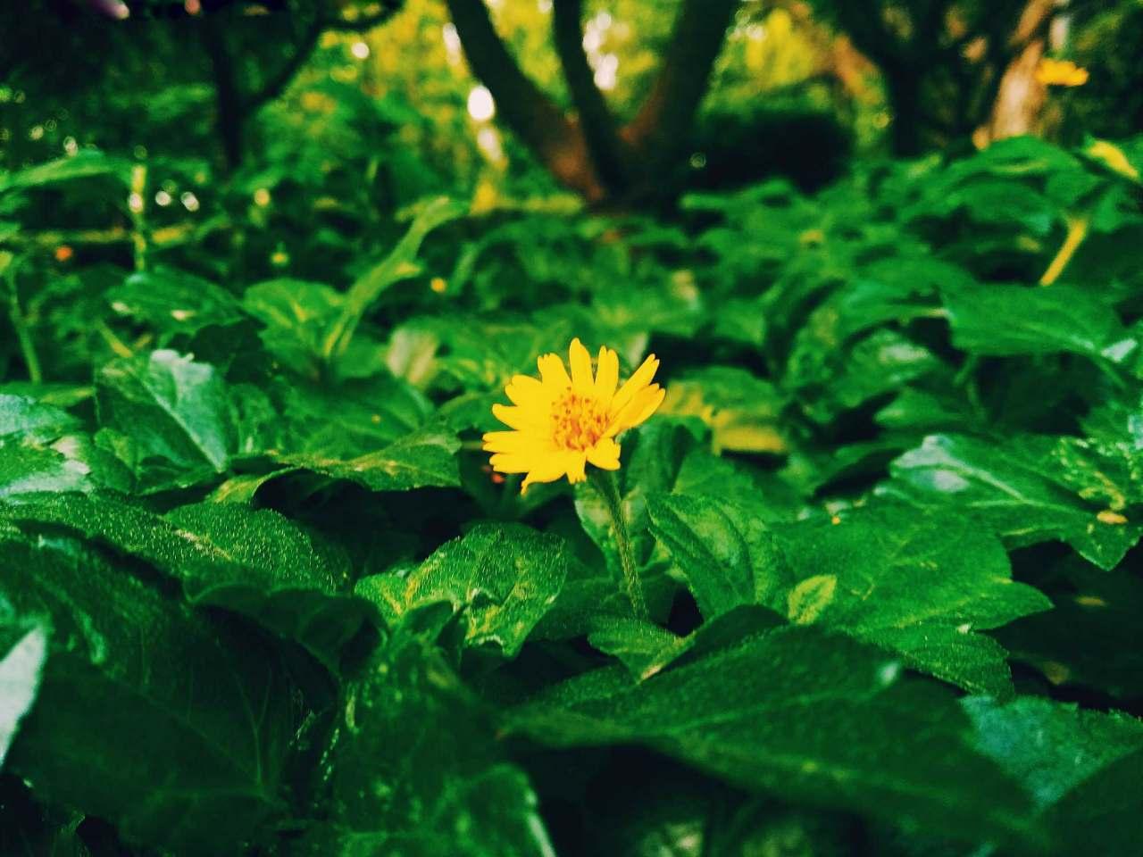 Flowers Are Restful To Look Hindi Quotes Hindi Shayari